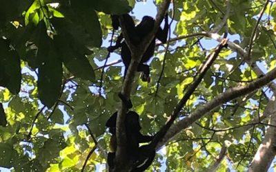 Erster Gruss aus Costa Rica