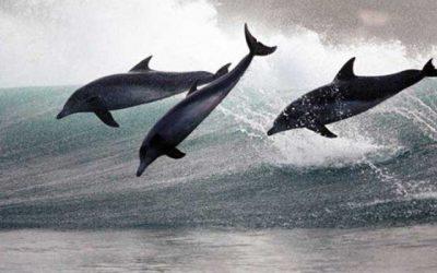 Wieder FÜHLEN lernen oder Surfen lernen auf den Wellen der Gefühle! Mit dem Herzen FÜHLEN oder FÜHLEN im Gleichgewicht !